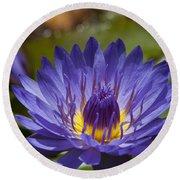 La Fleur De Lotus - Star Of Zanzibar Tropical Water Lily Round Beach Towel