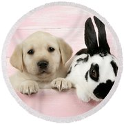 Lab Puppy And Bunny Round Beach Towel