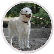 Labradoodle Holding Stick Round Beach Towel