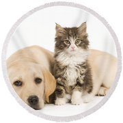 Labrador And Forest Cat Round Beach Towel by Jean-Michel Labat