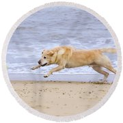Labrador Dog Chasing Ball On Beach Round Beach Towel