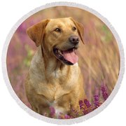 Labrador Dog Round Beach Towel