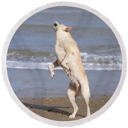 Labrador Dog Jumping For Ball Round Beach Towel