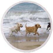 Labrador Dogs Running Round Beach Towel