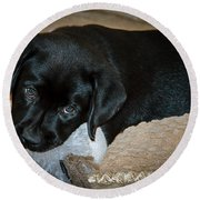 Labrador Puppy Round Beach Towel