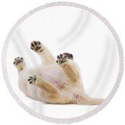 Labrador Puppy Rolling Over Round Beach Towel