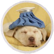 Labrador Puppy With Ice Pack Round Beach Towel