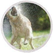 Labrador Retriever And Hose Round Beach Towel