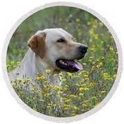 Labrador Retriever Dog Round Beach Towel