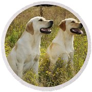 Labrador Retriever Dogs Round Beach Towel
