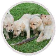 Labrador Retriever Puppies And Feather Round Beach Towel