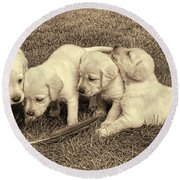 Labrador Retriever Puppies And Feather Vintage Round Beach Towel