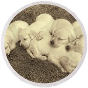 Labrador Retriever Puppies Nap Time Vintage Round Beach Towel by Jennie Marie Schell