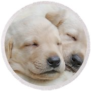 Labrador Retriever Puppies Sleeping  Round Beach Towel