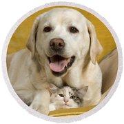 Labrador With Cat Round Beach Towel