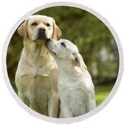 Labradors, Adult And Young Round Beach Towel