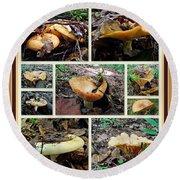 Lactarius Torminosus - Yellow Mushrooms Round Beach Towel
