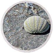 Lacy Shell On A Beachrock Round Beach Towel