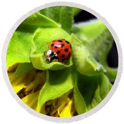 Ladybug And Sunflower Round Beach Towel