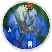 Lady Bug And Bluebonnet Round Beach Towel