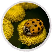 Lady Bug Round Beach Towel
