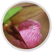 Lady Slipper At Moore State Park Close Up 1 Round Beach Towel
