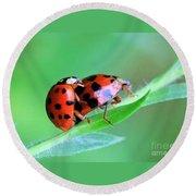 Ladybug And Gentlemanbug Round Beach Towel