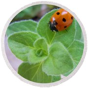 Ladybug And Oregano Round Beach Towel