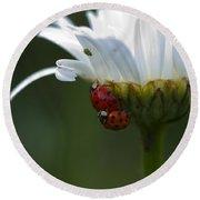 Ladybugs On Shasta Daisy Round Beach Towel