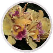 Laeliocattleya Lydia Hubbell Round Beach Towel