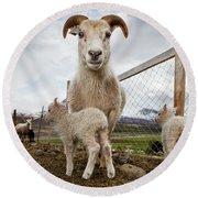 Lamb On A Farm, Iceland Round Beach Towel