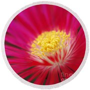 Lampranthus Abstract Round Beach Towel