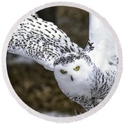 Landing Of The Snowy Owl Where Are You Harry Potter Round Beach Towel