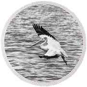 Landing Pelican In Black And White Round Beach Towel