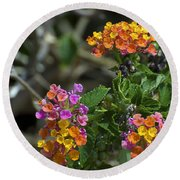 Lantana Blooms Round Beach Towel