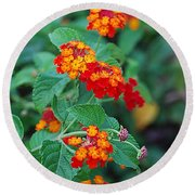 Lantana Delight Round Beach Towel