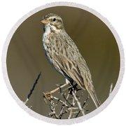 Large-billed Savannah Sparrow Round Beach Towel
