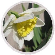 Large-cupped Daffodil Named Ice Follies Round Beach Towel