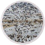 Large Flocks Of Migratory Birds Stop Round Beach Towel