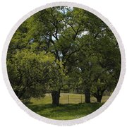 Large Green Oak Trees Round Beach Towel