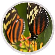Large Tiger Butterflies Round Beach Towel
