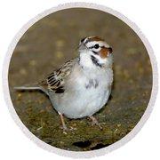 Lark Sparrow Round Beach Towel