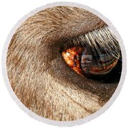 Lashes Round Beach Towel by Diana Angstadt