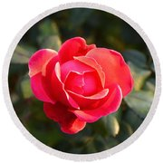 Last Rose Of Summer Round Beach Towel