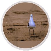 Laughing Gull 004 Round Beach Towel