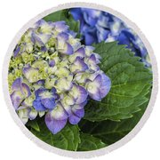 Lavender Blue Hydrangea Blossoms Round Beach Towel