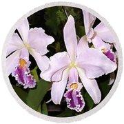 Lavender Cattleya Orchids Round Beach Towel