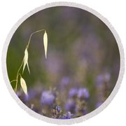 Lavender, France Round Beach Towel