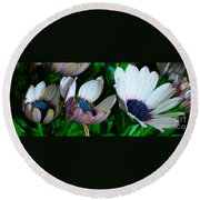 Lavender Frost African Daisy Round Beach Towel