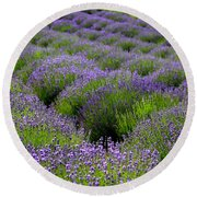Lavender Rows Round Beach Towel